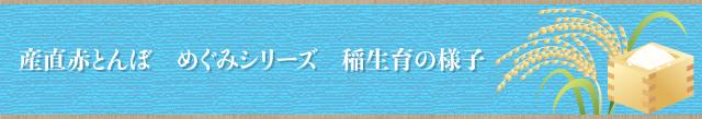 稲生育の様子